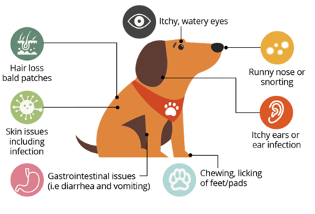dog-allergy-symptoms-graphic